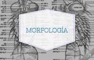 Departamento de Morfologia