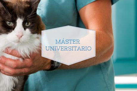 Master Universitario