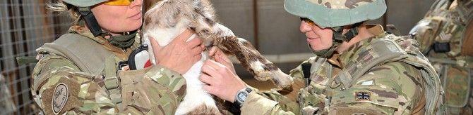 22 nov – El papel del veterinario en las Fuerzas Armadas. Salidas profesionales.
