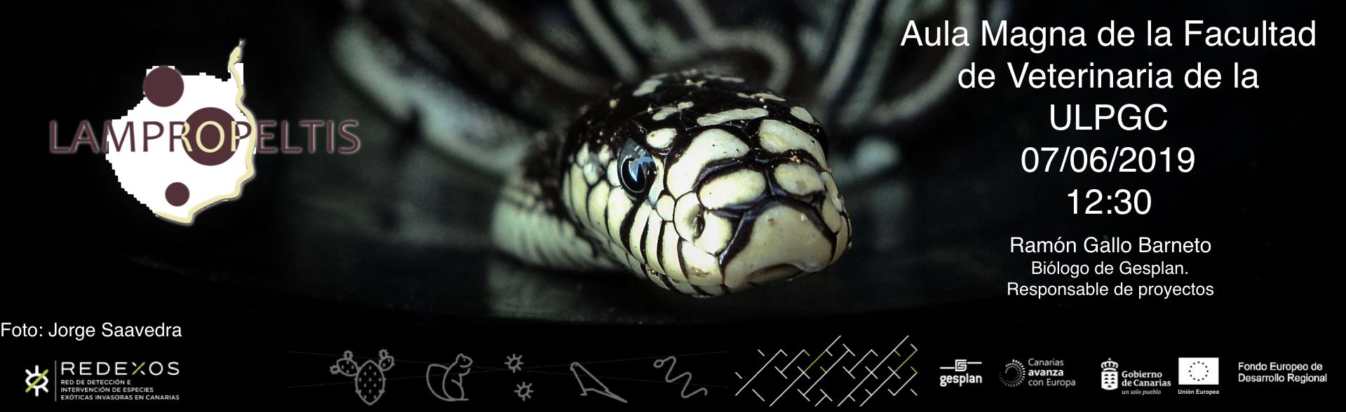 7 junio 12:30 horas Aula Magna  – Charla Proyecto RedEXOS. Alerta temprana en control de especies exóticas invasoras. El estado actual de la culebra real de California en Gran Canaria.